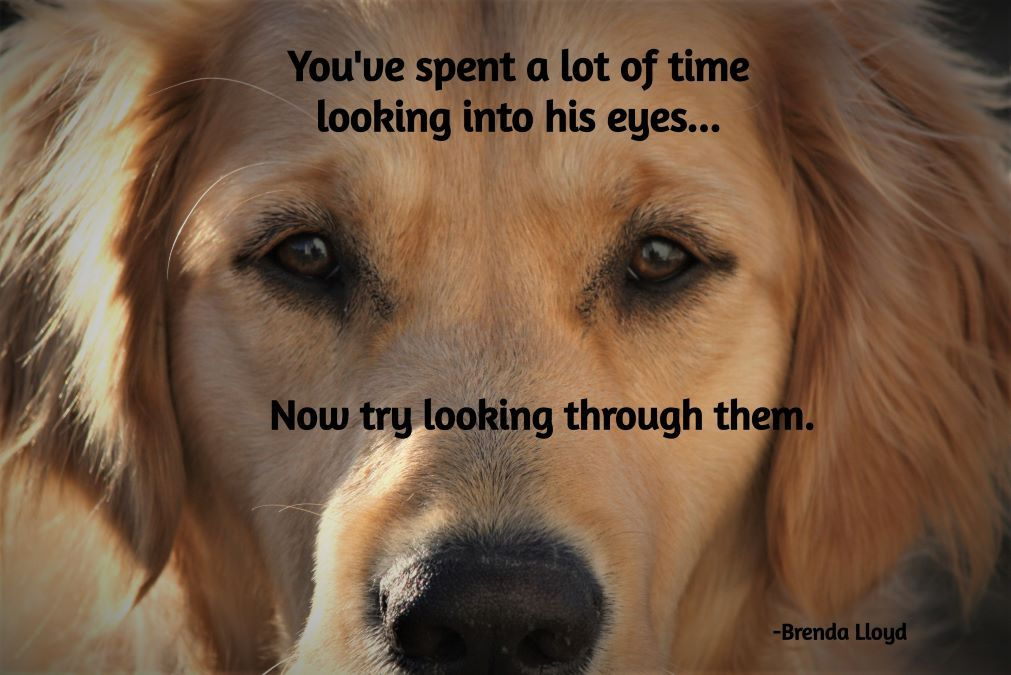 dog eyes, understanding dogs